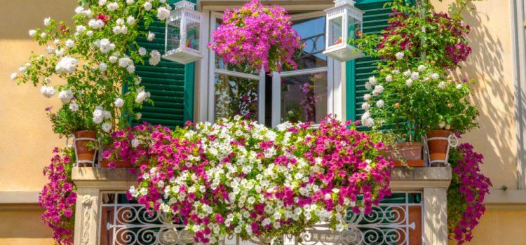 Quer transformar sua varanda em um jardim? Clique aqui e saiba como!